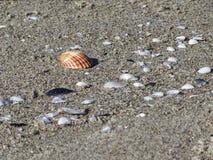 Seashells на песке волейбол лета пляжа шарика предпосылки красивейший пустой Взгляд сверху Стоковые Изображения