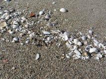 Seashells на песке волейбол лета пляжа шарика предпосылки красивейший пустой Взгляд сверху Стоковое Фото