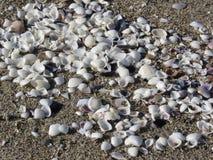 Seashells на песке волейбол лета пляжа шарика предпосылки красивейший пустой Взгляд сверху Стоковая Фотография