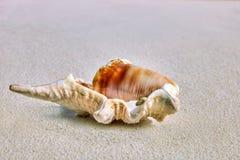Seashells на песке в тропическом острове Стоковое Изображение
