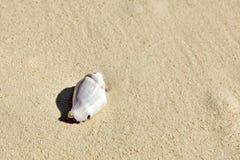 Seashells на песке в тропическом острове Стоковая Фотография RF