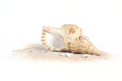 Seashells на песке изолированном на белом bakcground Стоковая Фотография RF
