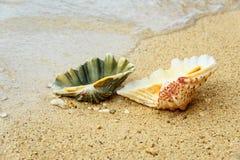 Seashells на песке на пляже Стоковые Фотографии RF