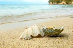 Seashells на песке на пляже Стоковые Изображения RF