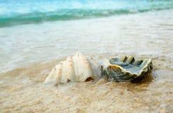Seashells на песке на пляже Стоковая Фотография