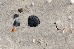 Seashells на песке приставают к берегу на горячем летнем дне солнца Стоковые Фото