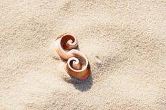2 seashells на песке пляжа как символ Стоковые Фото