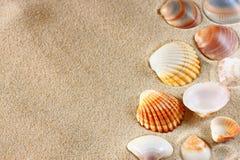 Seashells на песке пляжа Стоковое Изображение
