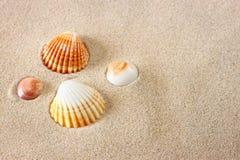 Seashells на песке пляжа Стоковые Изображения
