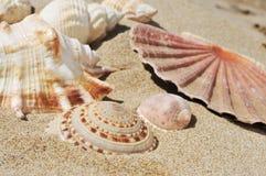 Seashells на песке пляжа Стоковое фото RF