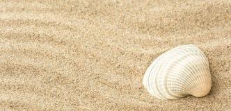 Seashells на песке пляжа Стоковые Фото