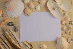 Seashells на песке - скопируйте космос Стоковые Изображения