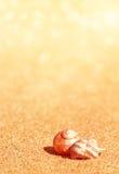 Seashells на песке Стоковая Фотография