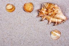 Seashells на песке Стоковые Фотографии RF