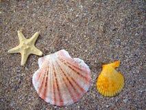 Seashells на песчаном пляже стоковое изображение rf
