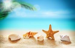 seashells на песчаном пляже и ладони Стоковые Фотографии RF