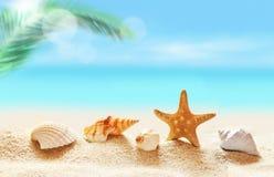 seashells на песчаном пляже и ладони Стоковые Фото