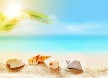 seashells на песчаном пляже и ладони Стоковая Фотография