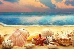 Seashells на песчаном пляже Стоковая Фотография