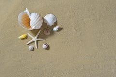 Seashells на песчаном пляже Стоковые Изображения RF