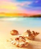 Seashells на песчаном пляже Стоковые Фотографии RF