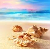 Seashells на песчаном пляже Стоковые Изображения
