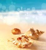 Seashells на песчаном пляже Стоковые Фото