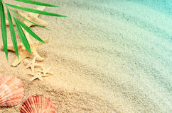 Seashells на пляже лета с песком стоковая фотография rf