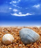 2 seashells на пляже песка Стоковое Фото