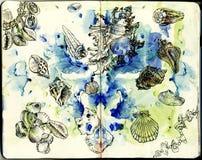 Seashells на предпосылке конспекта акварели Стоковое фото RF