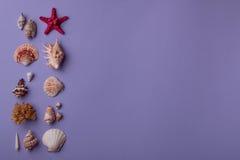 Seashells на пурпуре Стоковые Изображения RF