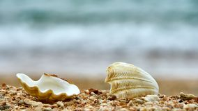 Seashells на пляже Ko Дао Стоковое Изображение