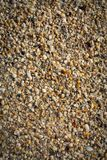 Seashells на текстуре пляжа Стоковое Фото