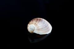 Seashells на черном sealife предпосылки Стоковая Фотография