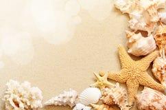 Seashells на seashore в тропическом пляже Стоковые Фото