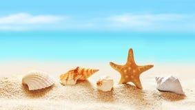 Seashells на seashore в тропическом пляже Стоковые Фотографии RF