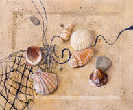 seashells песка бесплатная иллюстрация