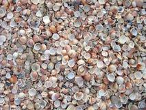 seashells пляжа Стоковое Изображение