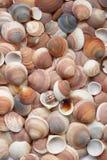 seashells предпосылки Стоковые Изображения RF
