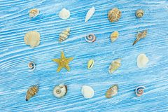 Seashells различных размера и формы на голубом деревянном покрашенном bac Стоковое Изображение RF