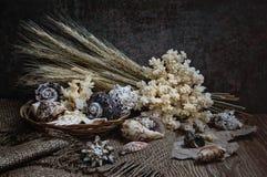 Seashells с кораллами Стоковая Фотография