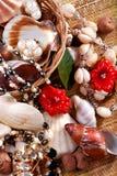 seashells ювелирных изделий Стоковое фото RF