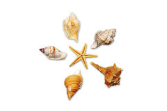 Seashells 01. Seashells photographed about white paper Royalty Free Stock Photography