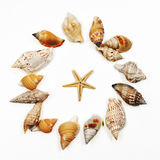 Seashells 02. Group of seashells, making a circle, photographed about white paper Stock Image