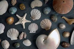 Seashells. Seashell collection on black slate Royalty Free Stock Photography