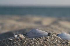 seashells Fotografia Stock