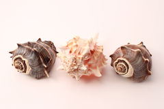 Seashells photos stock