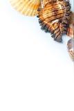 Seashells imagen de archivo libre de regalías