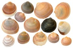 Seashells Royalty Free Stock Photography