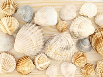 Seashells. Seeshells on a wooden table Royalty Free Stock Photos